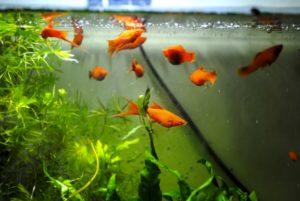 Aquarium onderhouden